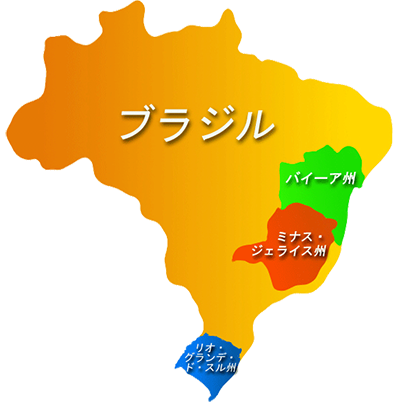 ブラジル入荷