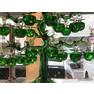 【原石(入荷商品)】ガラス リンゴの木 No、6082 (38個)